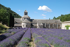 Sénanque Abbey - Abbey with lavender fields
