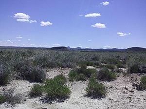 Saladar de Cordovilla (Hellín-Tobarra).jpg