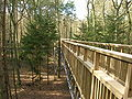 Salcey Forest Tree top walk.JPG