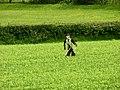 Scarecrow in farmers Field - geograph.org.uk - 449237.jpg
