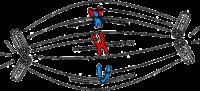 Schnoymetaphase.png