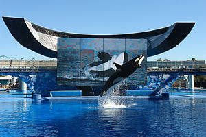 SeaWorld - Takara demonstrating a breaching move during the Believe show at SeaWorld Orlando.