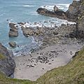 Seals at Godrevy 2 (4541002943).jpg