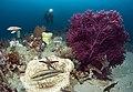 Seascape of Ocean Life.jpg