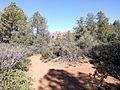 Secret Canyon Trail, Sedona, Arizona - panoramio (12).jpg