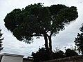 Senigallia LeGrazie PinoDomestico 1.jpg