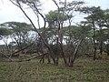 Serengeti National Park-119474.jpg