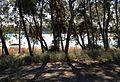 Seyhan River, Adana 07.JPG