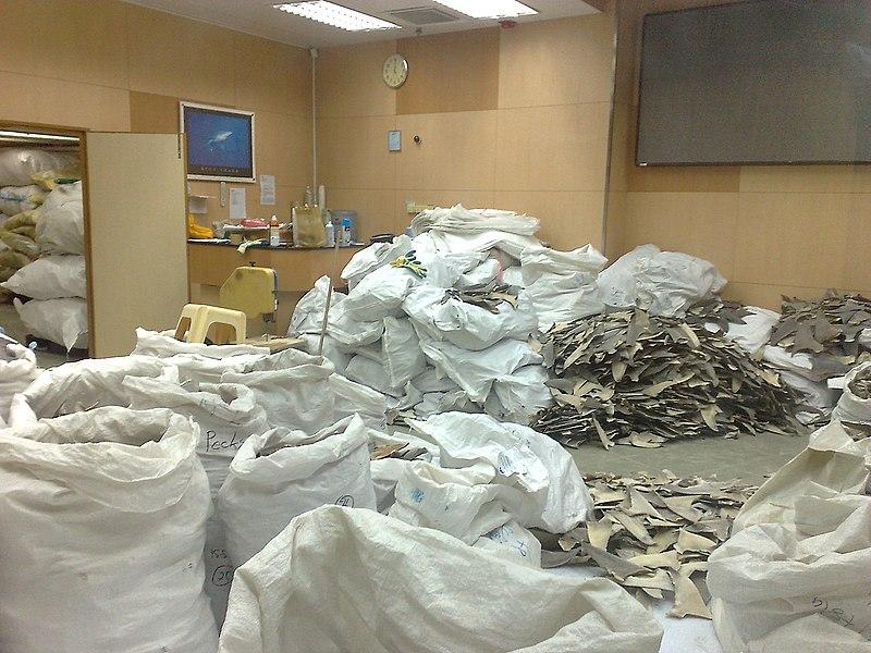 File:Sharkfin-warehouse.jpg