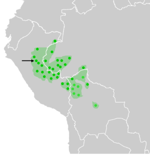 Shipibo-Conibo people - Distribution of the Shipibo-Conibo (marked with an arrow) amongst other Pano-speaking ethnicities