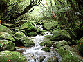 Un torrent sur Yakushima.