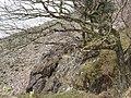 Shore of Loch Linnhe - geograph.org.uk - 443586.jpg