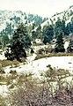 Sierra de las Nieves 1975 05.jpg