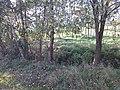 Slatiny - panoramio (12).jpg