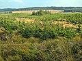 Slopes of Black Hill, Carrick Forest - geograph.org.uk - 263515.jpg