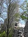 Smoleń - ruiny zamku.jpg