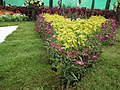 Snap from Lalbagh Flower Show Aug 2013 8370.JPG