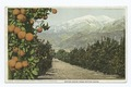 Snow and Oranges, A California Anomaly, California (NYPL b12647398-75558).tiff