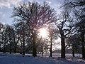 Snow walk - panoramio.jpg
