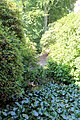 Sofiero (Helsingborg), in the valley of Rhododendron-3.JPG