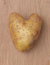 Solanum tuberosum 'Nicola', aardappel.jpg