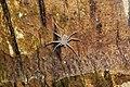 Sparassidae 6174.jpg