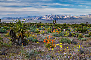 Spring Flowers in Red Rock Canyon National Conservation Area