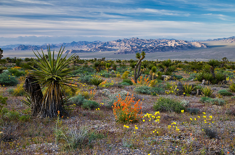 Spring Flowers in Red Rock Canyon National Conservation Area.jpg