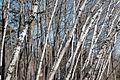 Spring in Lambton Park, Toronto, ON (26217156320).jpg
