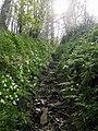 Spring wild flowers - geograph.org.uk - 1339443.jpg