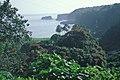 Starr-990106-3004-Spathodea campanulata-habit-Keanae-Maui (24525108105).jpg