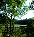 Staw Zielony - panoramio.jpg