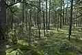 Stenkumla gravfält 4-1 - KMB - 16001000006830.jpg