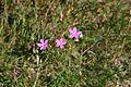 Stenshuvud Flowers 1.jpg
