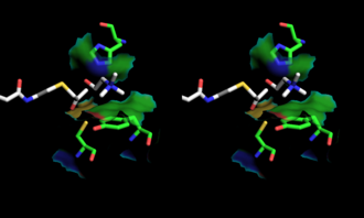 Choline acetyltransferase - Image: Stereoscopic depiction of choline and acetyl Co A in Ch AT active site