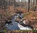 Stream flowing towards the Hill river in High Fens, Eupen, Belgium (VeloTour intersection 84-to-54, DSCF3700.jpg