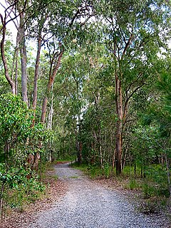 Stretton, Queensland Suburb of Brisbane, Queensland, Australia