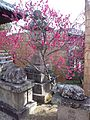 Sugawara-Ten'man-gû Shintô Shrine - Plum tree.jpg