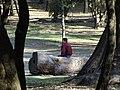 Sunday Afternoon in Chapultepec Park - Mexico City - Mexico - 06 (38971115301).jpg