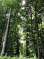 Sunlight through Trees.jpg