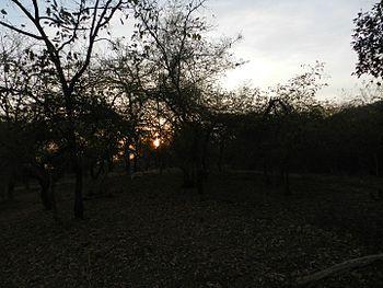 Sunrise in Gir.jpg