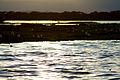 Sunset on the lake (5232073359).jpg