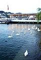 Switzerland-03365 - Swans (23842747435).jpg