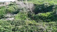 TEL EL KHUWEILFE - trenches 1.jpg