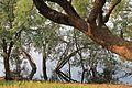 Tadoba Andhari Tiger Project 13.jpg
