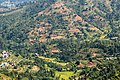 Terrace Farming in Nepal in Rakathum VDC-0369.jpg