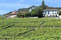 Terrasses de Lavaux - panoramio (109).jpg
