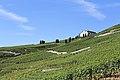 Terrasses de Lavaux - panoramio (96).jpg