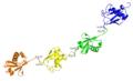 Tetraubiquitin-K63-3HM3.png