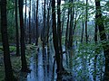 Teufelsbruch swamp with blooming Utricularia vulgaris and rain 06.jpg